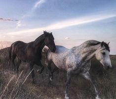 Dawn and Dusk - Pferde - All The Pretty Horses, Beautiful Horses, Animals Beautiful, Horse Girl, Horse Love, Cute Creatures, Beautiful Creatures, Animals And Pets, Cute Animals