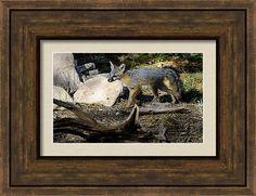 Gray Fox Framed Print featuring the photograph Gray Fox by Debra Martz