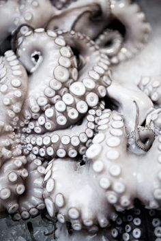 Pulpo: ARACELI PAZ.  Shades of slippery, silvery suckers.