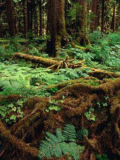 Dosewallips to Lake Quinault, Olympic National Park, Washington