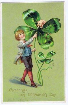 1907 St Particks Day Tuck's Postcard Pig in Clover Lancaster PA 112 | eBay