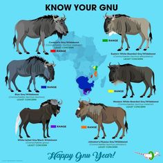The gnu's news Especie Animal, Animal Facts, Zoo Animals, Animals And Pets, Cute Animals, Animals Information, Fun Facts About Animals, Animal Species, African Animals