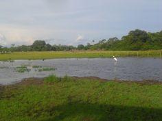 Pantanal, MS aquioualgumlugar.com
