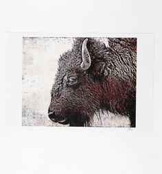 Beautifully detail Bison print by Tulsa's own Boxing Bear Print Co.