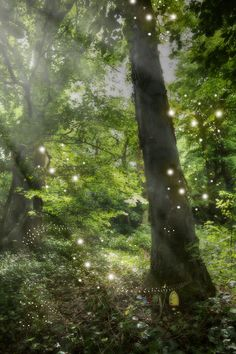 Fairy magic captured on camera!  Fairy Glen, Fairytale Fantasies, Chapter One, Do You Believe, Fairy Houses, Pretty Pictures, Mystic, Fantasy, Explore