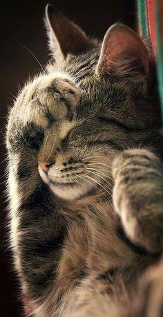 Do Not Disturb ! ZoranPhoto on DeviantArt cats kitty kitten animal pet fur fluffy cute kittens cutest Cute Baby Cats, Cute Cats And Kittens, Cute Funny Animals, Cute Baby Animals, Kittens Cutest, Funny Cats, Funny Horses, Wild Animals, Funny Animal Pictures