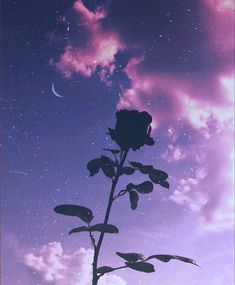 defaultr-b - 0 results for purple aesthetic Dark Purple Aesthetic, Violet Aesthetic, Lavender Aesthetic, Aesthetic Roses, Sky Aesthetic, Aesthetic Colors, Aesthetic Pictures, Purple Aesthetic Background, Aesthetic Collage