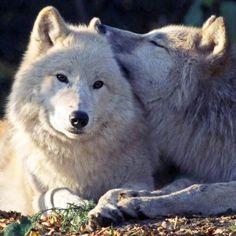 Whispering sweet nothings!