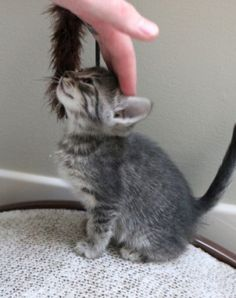 Magical-meow: Being Petted Is The Best By Jennuine...