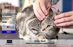 You Gotta Be Kitten Me: Cat Headphones