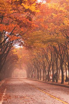 Autumn Colours Tunnel (Korea) by SEO