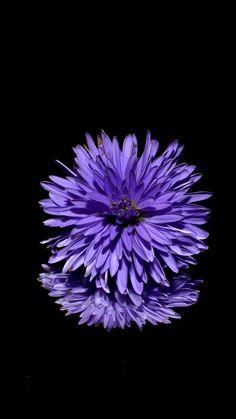 Purple Flower Wallpaper For Iphone Purple Flower Background, Purple Flowers Wallpaper, Hd Flowers, Purple Flower Photos, Dark Purple Flowers, Flower Background Wallpaper, Pretty Flowers, Iphone Wallpaper Violet, Crazy Wallpaper