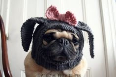 Dog Hat - Little Lady Rabbit Hat - Custom and Made to Order