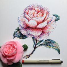pink, art şi flower imagine pe We Heart It Botanical Illustration, Illustration Art, Gcse Art Sketchbook, Flower Sketches, All Art, Badges, Art Inspo, Painting & Drawing, Flower Art