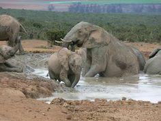 Elefanten-Badetag am Wasserloch