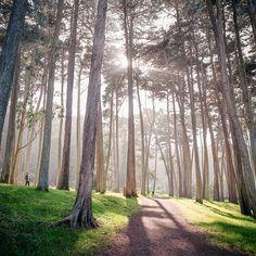park presidio san francisco