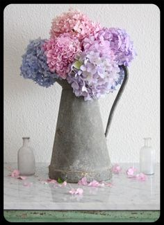 Memories - When we moved into our first house my husband's grandmother gave us hydrangeas that she had been raising for over 70 years. They went from cuttings to almost 5 foot tall and the length of our house when we moved. They look like family and home to me. : )
