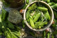 Mikstura na odrobaczanie przepis: 10 główek czosnku, woda z domowych kiszonych ogórków Herbal Remedies, Home Remedies, Polish Recipes, Slow Food, Preserves, Pickles, Asparagus, Green Beans, Cucumber