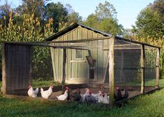 Chook house
