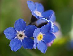 Acerca de flores silvestres que hay en el camino.