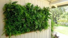 Plants On Walls vertical garden systems: Copper Framed Fern Wall Vertical Garden Systems, Vertical Garden Plants, Vertical Planting, Ferns Garden, Garden Planters, Indoor Garden, Indoor Plants, Vertical Gardens, Vertical Green Wall