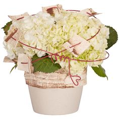 Bark Wrap and Ruby Wire Floral Arrangement