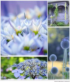 Periwinkle & chartreuse annekep