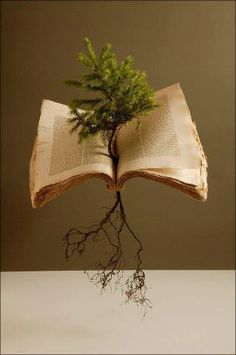 """What a dichotomy!! - a tree, providing itself a place to grow, using a layer of pages from a book - which - at one time, was a tree - It makes one think about the expression - """"The Tree of Life"""" - which - if we keep going as we are -  chopping them down - will become - """"The Death of Trees"""" -wk-"""