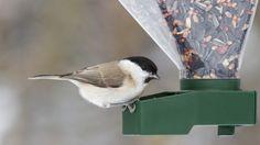 Futtersäulen und -spender, in denen die Körner selbst nachrieseln, wenn die Vögel das Futter entnehmen, sind besonders pflegeleicht.