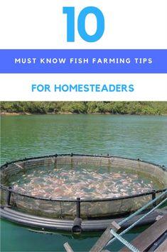 Aquaponics DIY Backyard - Quick Plans In Aquaponics Fish Around The Uk - Mc Geehan Aquaponics Fish, Aquaponics System, Backyard Aquaponics, Hydroponic Gardening, Backyard Farming, The Farm, Urban Homesteading, Homestead Survival, Survival Prepping