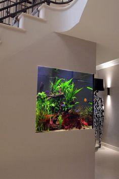 Luxury Discus Aquarium - Aquarium Architecture Diskus Aquarium, Nature Aquarium, Tropical Aquarium, Aquarium Design, Saltwater Aquarium, Planted Aquarium, Freshwater Aquarium, Fish Tank Wall, Fish Tanks