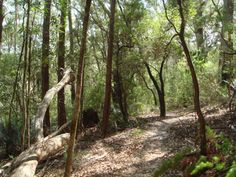 english geography sustainability ATSI A partly shaded walking track through coastal bushland on Fraser Island. Primary History, Primary Resources, Teacher Resources, Teaching Ideas, Australian English, Primary English, Evening Prayer, Teaching Geography, National Curriculum