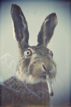 #weed #marijuana #rabbit #havingfun #smoke