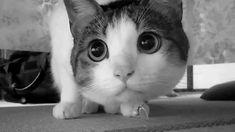 Gatos sempre caem de pé? Descubra 10 mitos sobre felinos