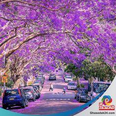 سیدنی بزرگترین و قدیمی ترین شهر استرالیاست که نماد آن نیز به شمار می رود. این شهر زیبا، سرشار از شگفتی و تنوع است به گونه ای که می توان نشانی از فرهنگ های گوناگون را در گوشه گوشه آن پیدا کرد. جالب است بدانید سیدنی که محبوبترین شهر استرالیا در میان جهانگردان است، مهاجران ایرانی بسیاری را نیز در خود جای داده است. https://www.ghasedak24.com