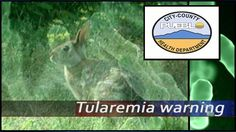 Public Health Officials confirmed three wild rabbits tested positive for tularemia in Pueblo.