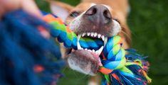 Úžasné hračky pro své psy můžete vyrobit i sami