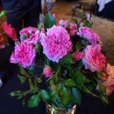 Sweet Drift by @Star Roses and Plants Biltmore International Rose Trials 2014 | The Redneck Rosarian
