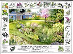 Learn How to Plant a Rain Garden Rain Yards and Plants