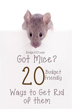 Ways to Get Rid of Mice! Learn easy tricks for preventing mice from entering the home and how to get rid of them if they do Mouse Deterant, Mouse Bait, Mouse Traps, House Mouse, Home Remedies For Mice, Diy Mice Repellent, Insect Repellent, Killing Mice, Keep Mice Away
