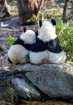 thelordismylightandmysalvation: Panda Love                              …