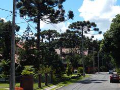 Em Gramado, ruas planas e limpas, com muito verde e casas lindíssimas, além de segurança, sossego, clima friozinho... na verdade Gramado é tudo de bom!