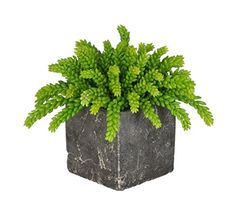 "Natural-looking & life-like. Artificial green sedum succulent plants. Contemporary stone cube (6"" x 6"" x 6"" tall). Perfect complement for any decor. Approximate overall dimensions: 11"" tall x 14"" diameter."