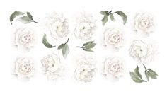 Ginger Monkey specialise in creating beautiful, contemporary wall decals and wallpaper for kids bedrooms, nurseries and your home. White Peonies, White Roses, Contemporary Wall Decals, Rose Wall, Flower Wall Decals, Peony Rose, Watercolor Flowers, Watercolour, Leaf Design