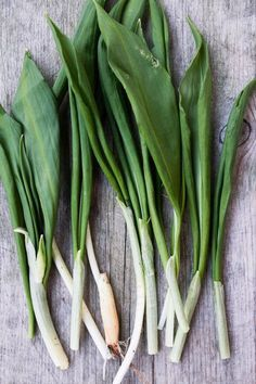 ramslok Food Storage, Amelia, Celery, Green Beans, Spinach, Herbs, Vegetables, Plants, Mat