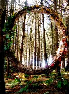 Portal in the woods. https://www.facebook.com/65239508296/photos/pb.65239508296.-2207520000.1406224249./10152061103628297/?type=3
