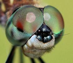insectes macro