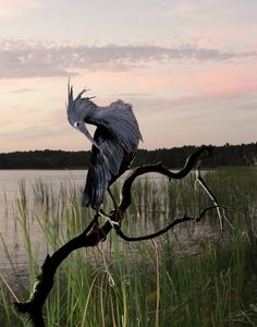 take me to the nesting pond of the blue heron and sit with me awhile