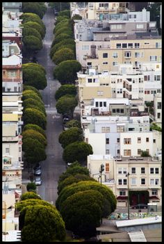 A section of 24th Street in San Francisco has been called Broccoli Row due to the appearance of the Indian Laurel Fig trees from a distance. Photo by Craig MacIntosh