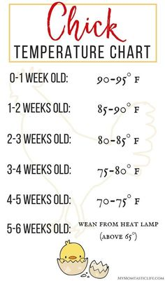 The First 6 Weeks of Raising Chicks – Guide For Beginners Chick Temperature Chart – Raising Chicks For Beginners – Week by week temperature chart, plus tips and advice on what to expect week by week when raising backyard chickens.